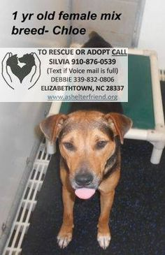 Elizabethtow, NC Shelter Dog - Final Plea - Please Foster if You Cannot Adopt - Help Them Find a Home