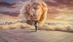 Photographer DIEGO AGUILAR CARRERA  Trascend Lion  ONE EYELAND