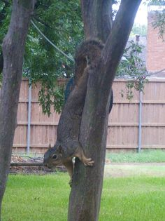 Wildlife habitat combat broke out when the squirrels raided the bird feeders. Click for more.