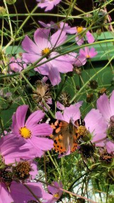 Plants, Butterflies, Plant, Planting, Planets
