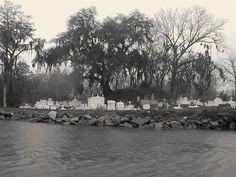 Bayou Graveyard   Flickr - Photo Sharing!