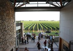 Jackson Triggs winery, Niagara region, Canada