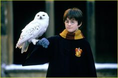 Harry potter, Hedwig ( The beginning )
