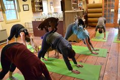 Move over, hot yoga, there's a new yoga trend in town: yoga with baby goat. You can't bleat that! Jenness Farm in New Hampshire held a yoga class attended by baby goats, who naturally think that yo…