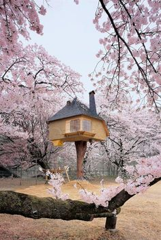 Teahouse Tetsu Japan - Most Beautiful Pictures