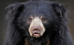 Finally, Freedom for India's Dancing Bears