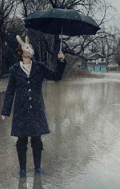 rabbit on rain