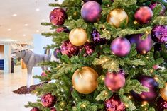 Met onze 12 verschillende kleurpakketten heeft u altijd de gewenste uitstraling! Door gebruik van verschillende maten kerstballen wordt er meer diepte gecreëerd met als resultaat een luxe en volle uitstraling.   Welk kleurpakket past het beste bij uw bedrijf? Bekijk en bestel eenvoudig via onze webshop: zie link in bio/webshop.ambius.nl   #kleurpakketten #kerst #beleving #ambius #kerstdecoraties #kerstopkantoor #sfeer