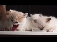 Funny Christmas, Christmas Pictures, Kittens, Cats, Animals, Cute Kittens, Xmas Pics, Gatos, Animales