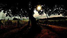 Indischer Wein: Wenn der Maharadscha zur Verkostung bittet…