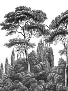 Paysages gravures - Pins et cyprès noir et Blanc - L225xH300cm - 3 lés de 75cm