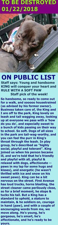 SAFE 01/25/18 --- SUPER URGENT Manhattan Center KING – 15937  **RETURNED 12/23/1**  Intake Date: 12/12/17  Intake Type: Owner surrender,  Medical Behavior: Blue, Age: 1 year, Sex: Male,  Weight: 42 lbs http://nycdogs.urgentpodr.org/king-15937-2/
