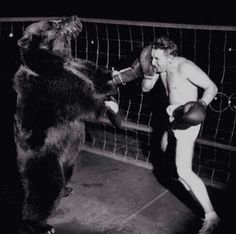 In 1949, An official boxing match between a bear and a man was held. The bear won.