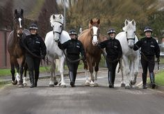 Four brave Greater Manchester Police horses hanging up their horseshoes and retiring to The Horse Trust's in 2011. They had notched up nearly 50 years' service and had all been involved in a wide range of duties, including policing public order situations, crowd control at football matches and city centre patrols. Nickleby, Oliver and Fairfax helped to police the major disorder in Manchester city centre in 2011. http://www.gmp.police.uk
