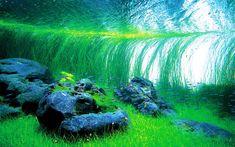 takashi amano nature aquarium