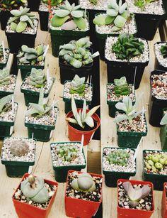 All About Succulents | http://jillianastasia.com/about-succulents/