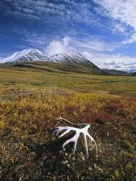 Otra preocupación es que alrededor de un tercio del carbono del suelo unida a la del mundo está en zonas de taiga y tundra. Cuando el permafrost se derrite, se libera de carbono en forma de dióxido de carbono y metano, [8], tanto de los cuales son gases de efecto invernadero. El efecto ha sido observado en Alaska. En la década de 1970 la tundra era un sumidero de carbono, pero hoy en día, es una fuente de carbono.