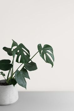 Elevated minimalist botanical stock photo by Moyo Studio — minimalist design, simplicity, minimal Plant Aesthetic, Simple Aesthetic, Aesthetic Collage, White Aesthetic, Aesthetic Painting, Aesthetic Design, Aesthetic Photo, Minimalist Photos, Minimalist Photography