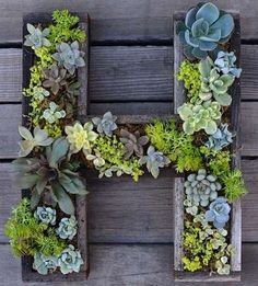 Personalized Planters For a personalized take on succulent gardening, try creating planters in the shape of your initials and filling the...