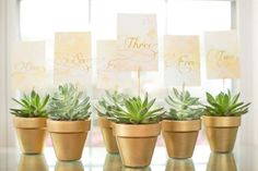 Succulents in gold-painted pots #tablenumber #gold #goldwedding #succulent #weddingdecor