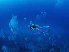 Well learn to swim then learn to scuba dive :)