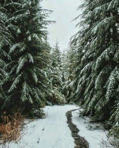 snowy day - nature | winter wonderland - snow - natural - outdoors - wilderness - wild - beautiful - cold - outdoors - explore - adventure - nature photography