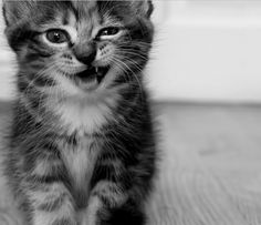 Chaton Cute Kittens Chaton Rigolo Animales