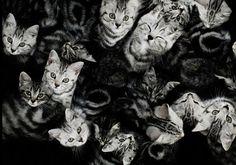dicas pet shop: Nomes de gato que começam com B