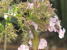 Did you know a hummingbird can flap his wings 100 times per second?  Try to see how many times you can flap your arms in a second.  Stop, people in the other room are watching!