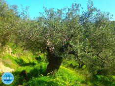tweedaagse-survivalwandeling - Zorbas Island apartments in Kokkini Hani, Crete Greece 2020 Greece, Golf Courses, Sandstone Wall, Crete Holiday, Wilderness, Campsite, Greece Country