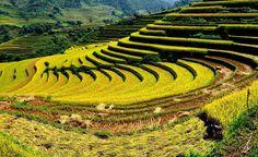 Vietnam Travel News - Vietnam Rice Terrace