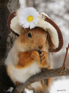 Cute Red Squirrel Wearing a Hat Cute Baby Animals, Animals And Pets, Funny Animals, Wild Animals, Beautiful Creatures, Animals Beautiful, Cute Squirrel, Squirrels, Tier Fotos