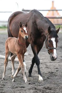 Horses - Darling