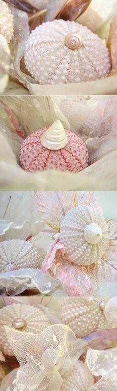 ❥ beautiful sea urchin bouquet~