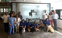 #Los pacientes del hospital de Ibiza pueden ser visitados por sus perros - LaCapital.com.ar: LaCapital.com.ar Los pacientes del hospital de…