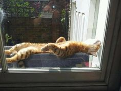 I look at my cats lying in the sun, and I have to think :: Somewhere along the line, I made a poor career choice.