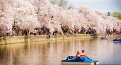 Ideas for how to celebrate spring and the National Cherry Blossom Festival in Washington, D.C.