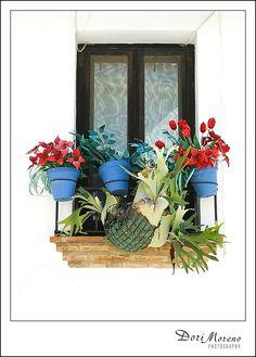The simple beauty of colour and plants, Spain Vibrant Colors, Colours, Terrarium, Spain, Fancy, Display, Simple, Plants, Gifts