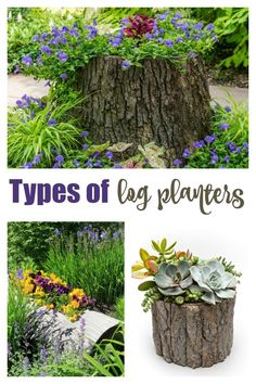 Stump planter, trough planter and log pot are all types of log planters. They are rustic, affordable and can be made with materials from your back yard.  Find out how to make them! #logplanters #logplantpots #gardening #gardendiy Garden Beds, Garden Art, Garden Design, Unique Gardens, Amazing Gardens, Log Planter, Trough Planters, Shade Trees, Autumn Garden