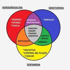Brain Trainer, Med Lab, Brain Anatomy, Biochemistry, Neuroscience, Human Body, Dental, Psychology, Medicine