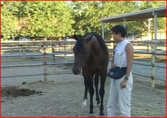 Clicker Training Horses: Can It Be Done? | Animal Behavior and Medicine Blog | Dr. Sophia Yin, DVM, MS