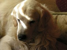 Small Dog Breeders Alberta - Best Dog 2018