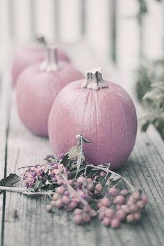 Mauve pumpkin