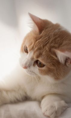 480x800 Wallpaper kitten, spotted, bright, playful, play
