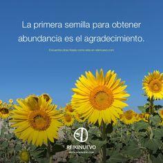 La semilla de la abundancia  http://reikinuevo.com/semilla-abundancia/