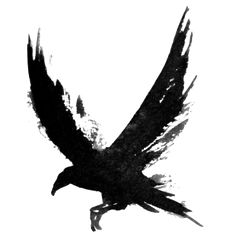 crow open wings - Google Search