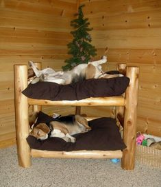A-Dorable!! Beagle Bunk Bed...lol! #furrybabies #forthepups #doggybeds #diy #furryfriends