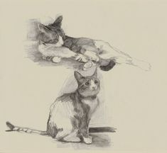 Ideas For Cats Sketch Posts Animal Sketches, Animal Drawings, Art Sketches, Art Journal Inspiration, Art Inspo, Cat Sketch, Cat Pose, Paper Artwork, Red Cat