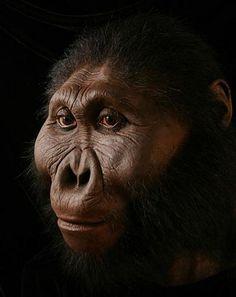 """El primer hallazgo de un fósil de esta especie lo debemos a Louis Leakey, quien en 1959 reportó el hallazgo de una nueva especie """"Zinjanthropus"""", en la garganta de Olduvai, en Tanzania. Este especímen fue datado en 1,8 millones de años. Hallazgos subsecuentes de esta especie se produjeron en el norte de Tanzania, en el norte de Kenya y en el sur de Etiopía."""