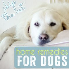 Fido is not feeling 100%, but you want to wait it out before you take him to the veterinary hospital. We have all been there at one point or another. Luckily, some minor sicknesses can be treated at home with medicines or kitchen essentialsyou may already have. Here area few at-home solutions f